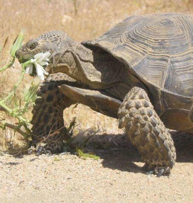 sos-turtle-news